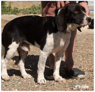 Lost Dog Animals And Pets In Oria
