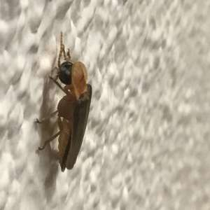Can anyone tell me what this insect  is.