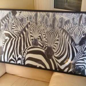 For sale: Large Zebra picture - €25