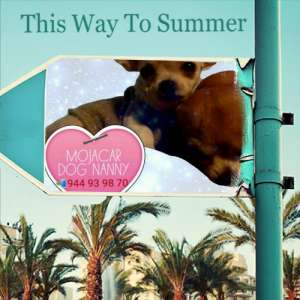 Day Care for dogs in Mojacar playa