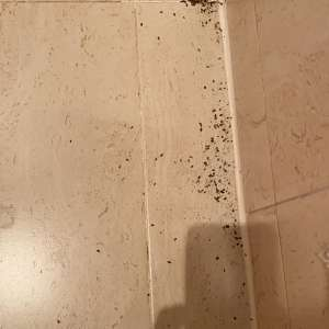 Insect or Creature mess
