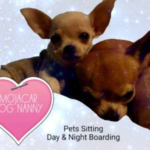 Pet Keeper services, night and day boarding in Mojacar